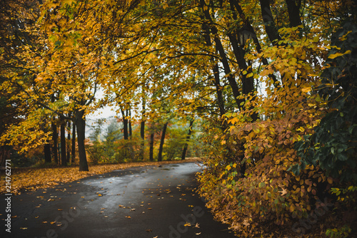 Fotobehang Grijze traf. Autumn landscape of yellow leaves park and road