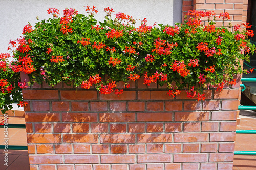 Red flowers on a brick wall of a building