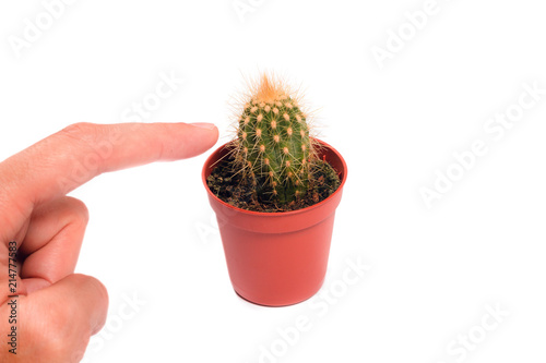 Staande foto Cactus Finger touching a cactus on a white background