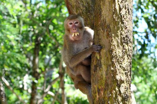 Foto op Plexiglas Aap Mother, who eat banana hugging baby monkey Sitting on tree.