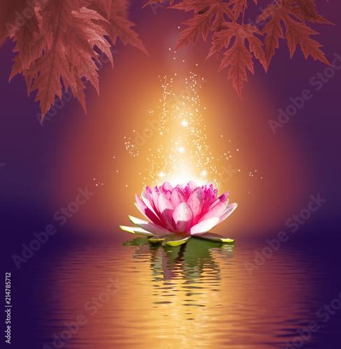 Foto auf Gartenposter Lotosblume lotus flower on water closeup