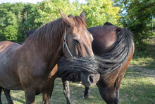 Two Horses Helping Each Others...