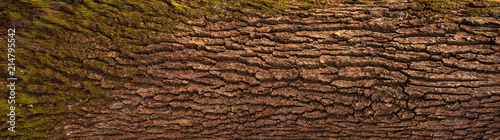Fotografie, Obraz Embossed texture of the bark of oak