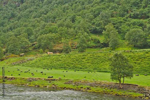 Foto op Plexiglas Pistache Scenic norwegian green landscape