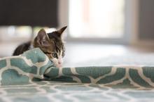 Cute Little Kitten At Home Pla...