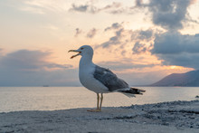Seagull At Red Sunset
