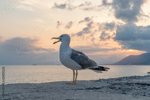 seagull at red sunset Slika na platnu