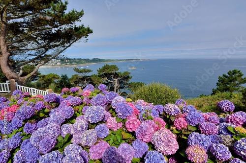 Photo sur Toile Hortensia Magnifiques hortensias de Bretagne