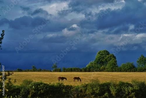 Fotografia chevaux attendant la tempete