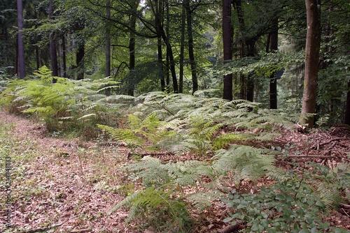 Fotobehang Weg in bos Lasy ,Środowisko przyrodnicze i naturalne