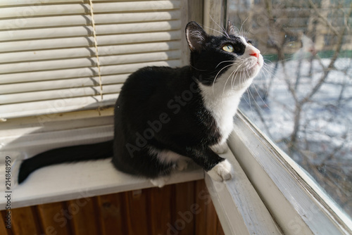 Keuken foto achterwand Kat funny cat