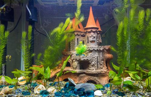 Newly populated fresh aquarium with planted algae, no fish
