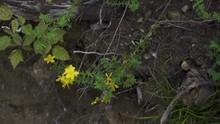 Paralex - Topdown - Shot Of An Agrimonia Eupatoria (Odermennig).