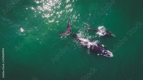 Aerial view over a Southern Right Whale and her calf along the overberg coast cl Fototapeta