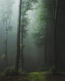 Szlak bajki w mglistym lesie. Fantazja straszny krajobraz w lesie - 214880502