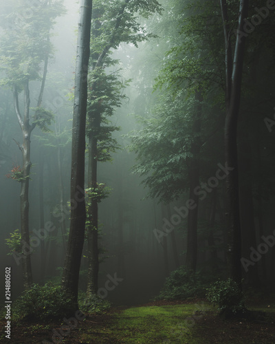 Fotobehang Bos Fairy tale trail in foggy forest. Fantasy spooky landscape in woodland