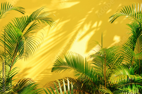 Foto  Bright yellow painted wall framed with green tropical palm leaves, sunlight with shadows patterns, summer background