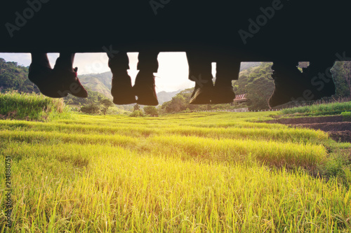 Staande foto Zwart Underside view of dangling Four people legs with wearing trekking shoes sitting on the edge of wooden board-walk against a background of gold rice field.