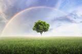 Fototapeta Tęcza - Rainbow with meadow.