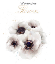 White Poppies Flowers Isolated Vector. Beautiful Wedding Card. Delicate Backgrounds