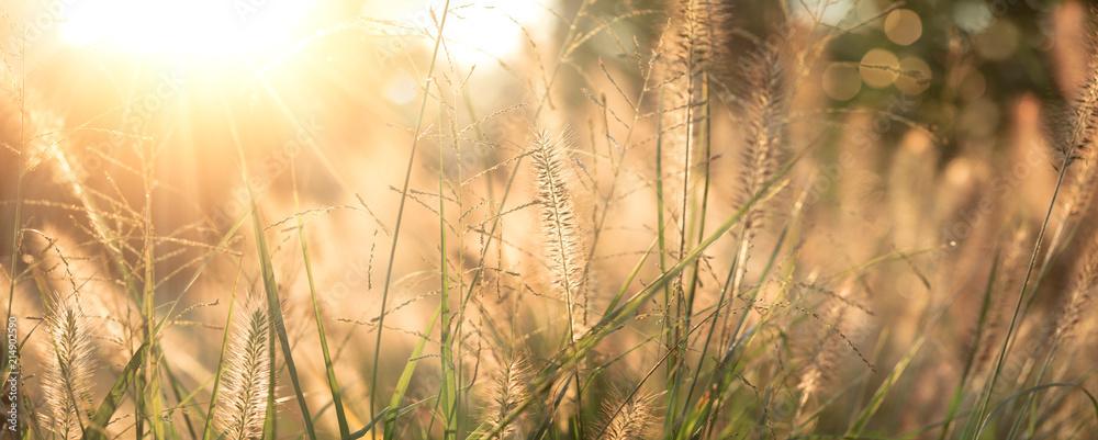 Fototapety, obrazy: Grass field background