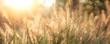 Leinwanddruck Bild - Grass field background