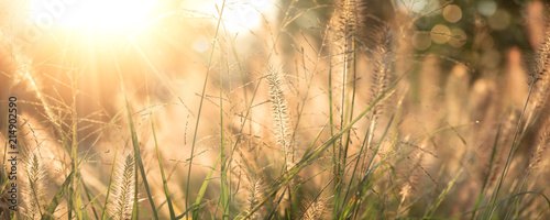 Poster Meadow Grass field background
