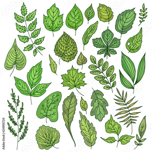 Color vector set of different fresh green leaves. #214905724