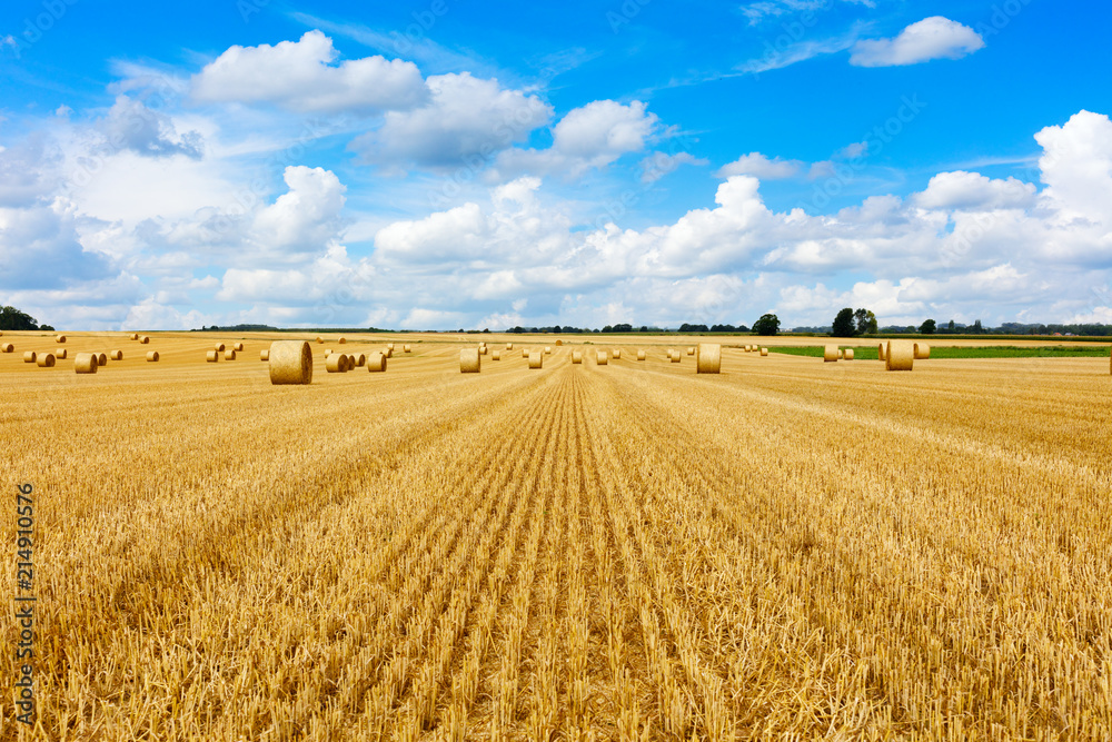 Fototapeta Yellow golden straw bales of hay in the stubble field, agricultural field under a blue sky with clouds