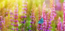 Beautiful Butterflies On Meadow Flowers.