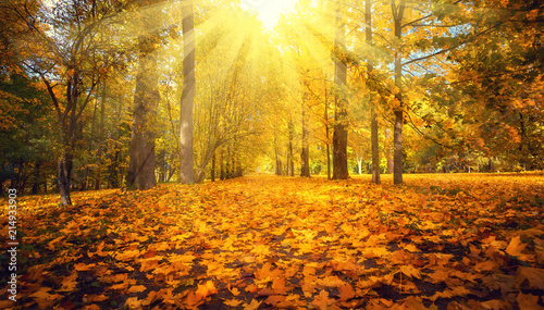 Fotobehang Herfst Autumn landscape. Fall scene.
