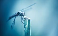 Insecte Libellule Seul En Gros...