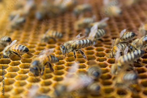 Plakat Honeycombs - sześciokątna struktura pełna miodu wewnątrz ula z pracującymi pszczołami.