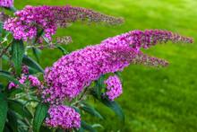 Summer Flowers: Flowering Plan...