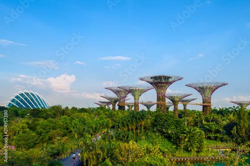 Photo  シンガポール 植物園