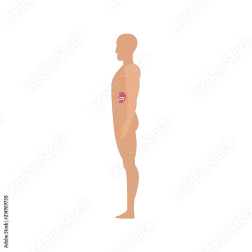 side view spleen human body icon flat illustration of side view spleen human body vector icon for web isolated on white buy this stock vector and explore similar vectors at adobe spleen human body vector icon