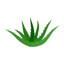 Aloe Vera Icon. Flat Illustration Of Aloe Vera Vector Icon For Web Isolated On White