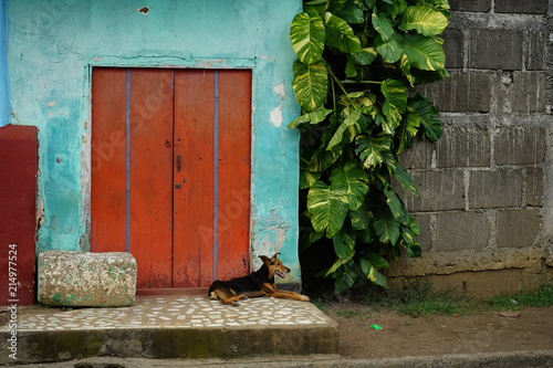 Dogs on the Street in Masaya, Nicaragua Wallpaper Mural