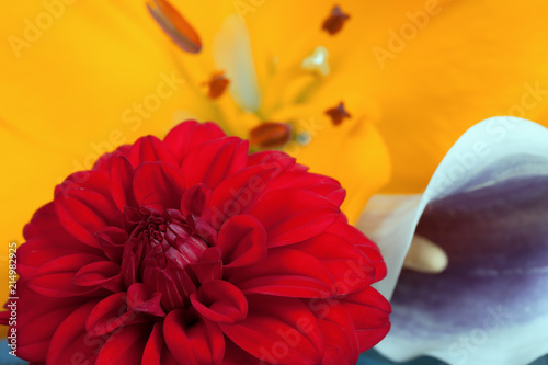 In de dag Dahlia A red dahlia flower next to a zantedeschia aethiopica and the flower of a yellow Asian lily
