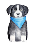 Border collie puppy character sketchy drawing. One of most intelligent domestic dog breeds. Sitting pose, front view, looking at camera. Hand painted water color graphic on white background, cutout. - 214993759