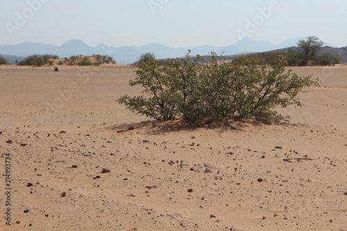 Foto  Busch in der Wüste