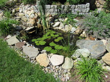 View Of A Man Made Pond With Lily Pads And Plants Surrounding It
