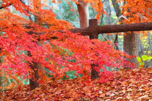 Foto op Canvas Baksteen 公園のもみじの風景13