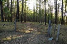 Estrada De Terra  Bloqueada Por Porteira Em Meio A Plantaçao De Arvores De Eucaliptos Sudeste Do Brasil