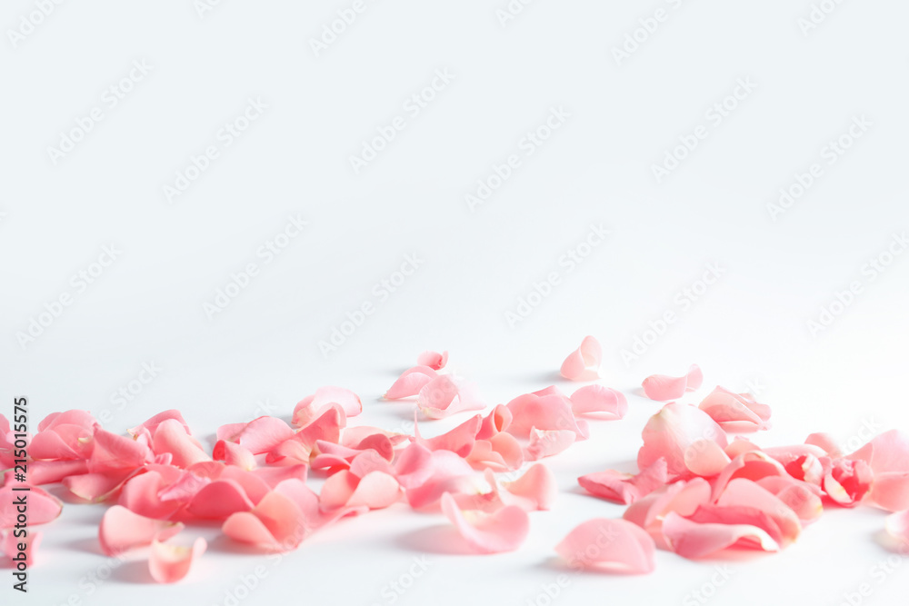 Fototapeta Beautiful rose petals scattered on light background