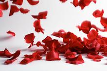 Beautiful Rose Petals Falling On Light Background