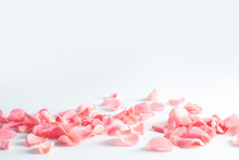 Beautiful Rose Petals Scattere...