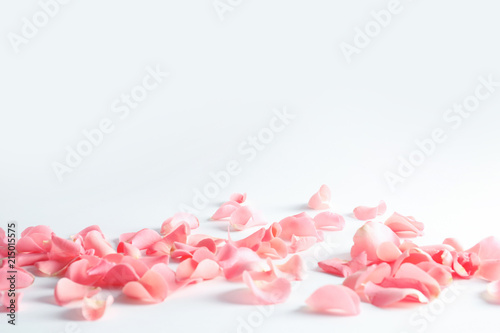 Ingelijste posters Roses Beautiful rose petals scattered on light background