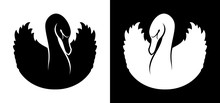 Black And White Swans