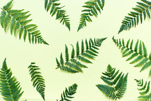 Pattern With Forest Ferns. Fla...